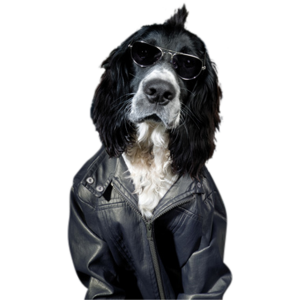 GlasArt Dog Leather Jacket
